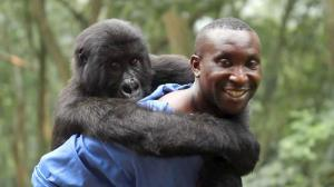 I want to give a gorilla a piggy-back ride! I want to save all the gorillas!